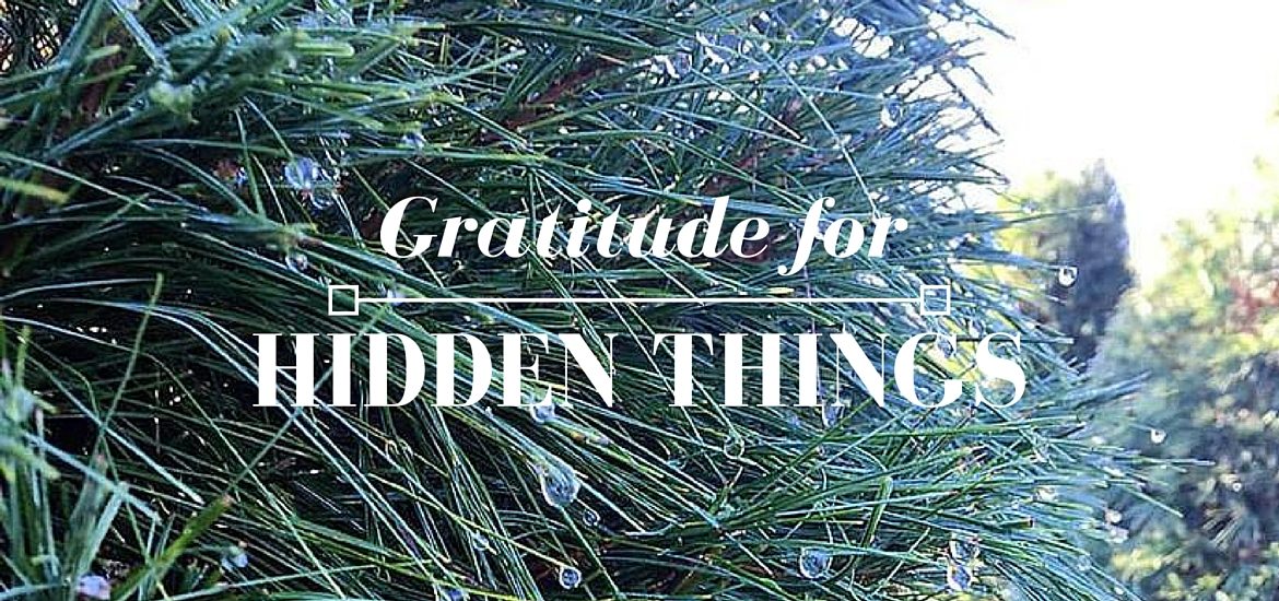 Gratitude for Hidden Things - Advent post on Literate Theology / Kate Rae Davis