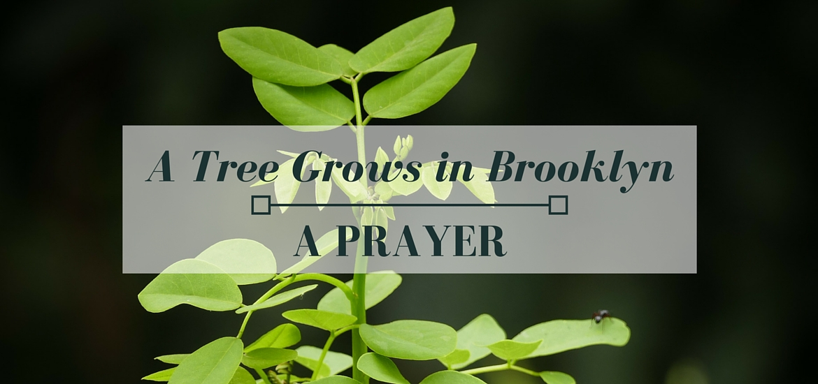 "A prayer for full humanity in ""A Tree Grows in Brooklyn"" - read in Literate Theology / KateRaeDavis.com"